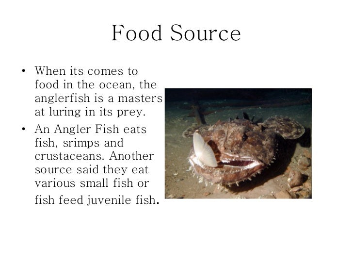 The mysterious adventures and life of the anglerfish for What do angler fish eat