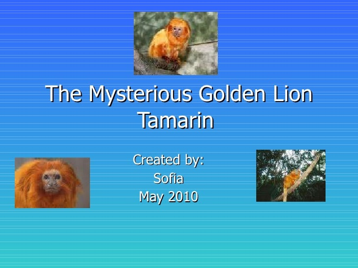 The Mysterious Golden Lion Tamarin  Created by: Sofia May 2010