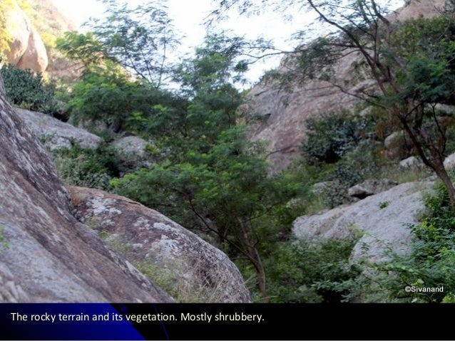 The rocky terrain and its vegetation. Mostly shrubbery.