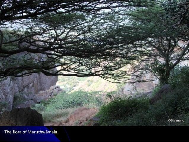 The flora of Maruthwãmala.