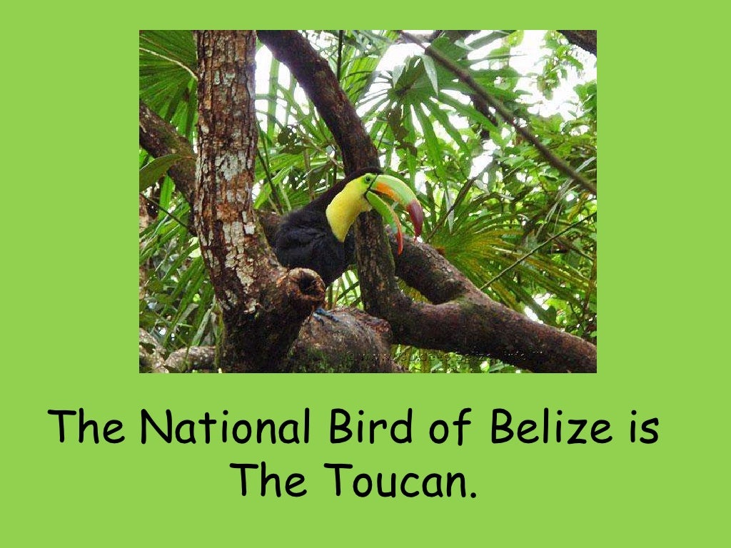 The national symbols of belize biocorpaavc Image collections
