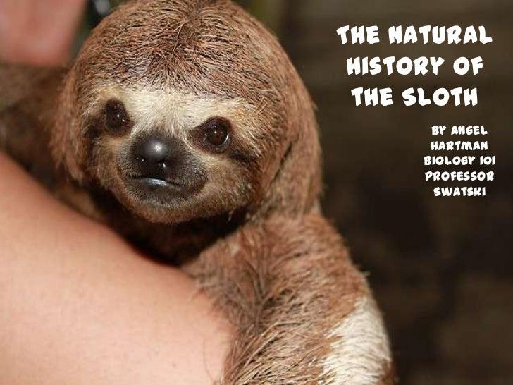 The Natural History of the Sloth       By Angel       Hartman      Biology 101      Professor       Swatski
