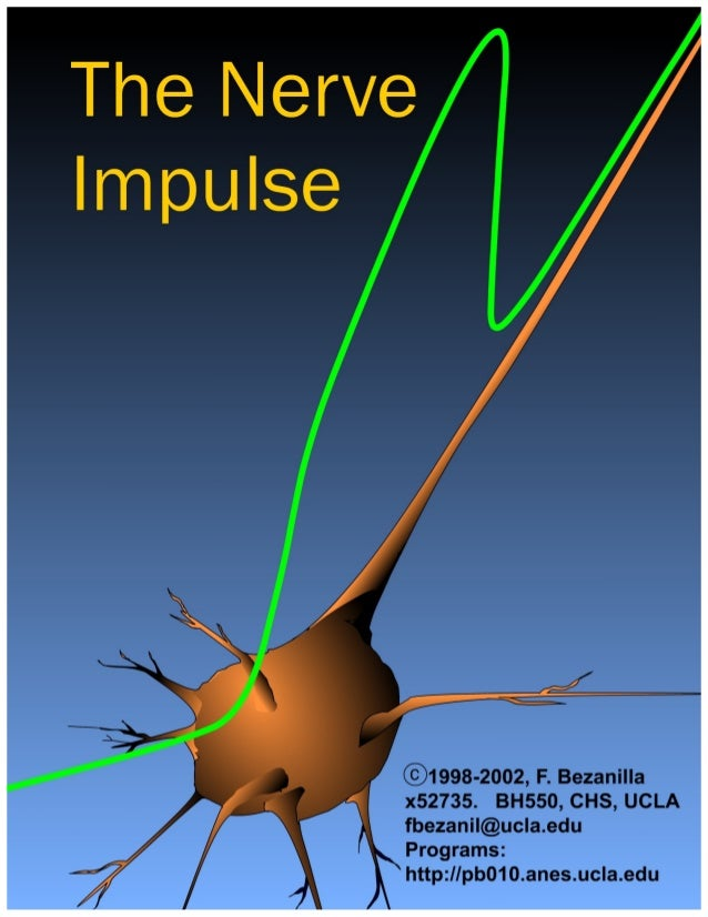 The nerve impulse.INTRODUCTION        Axons are responsible for the transmission of information between different points o...