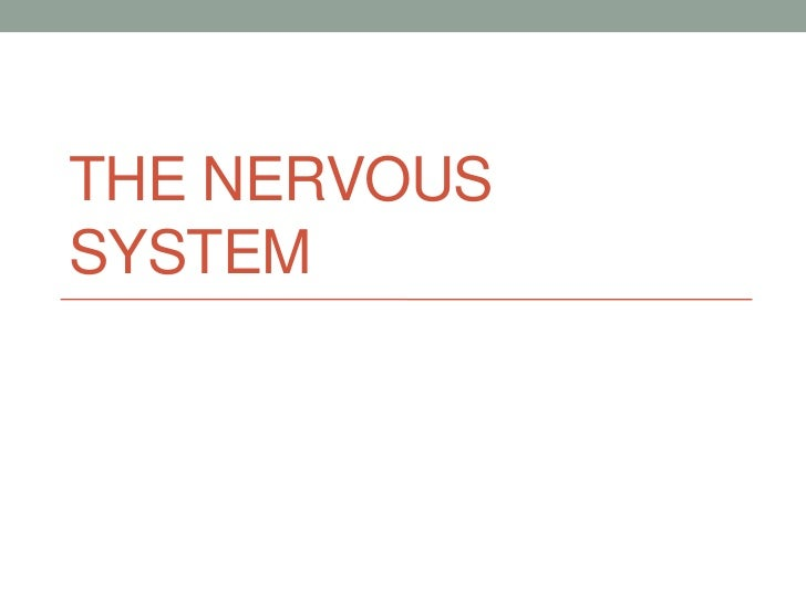 THE NERVOUSSYSTEM