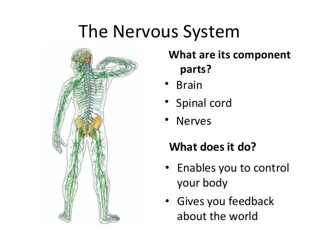 the nervous system 2 638