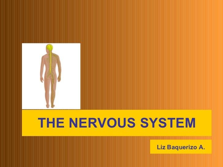 THE NERVOUS SYSTEM Liz Baquerizo A.