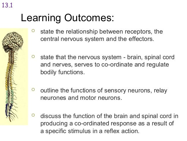 The relationship between the nervous system