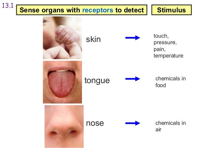 different types of sense organs