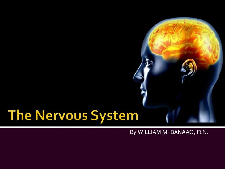 The Nervous System<br />By WILLIAM M. BANAAG, R.N.<br />