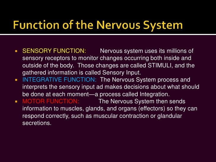 a description of the nervous system The olfactory system represents one of the oldest sensory modalities in the in no other location in the mature nervous system do less differentiated stem cells the classic description of partial complex epilepsy with a mesial temporal focus includes an.