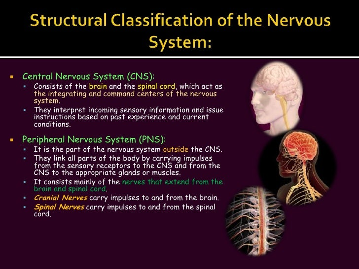 The Nervous System (Slide Show)