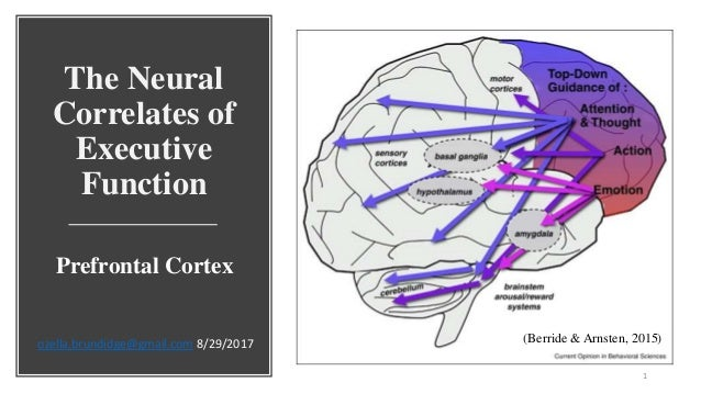 Neural Correlates of Thinking (On Thinking)
