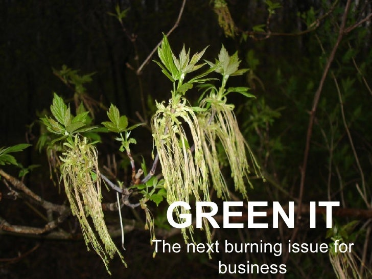 THE NEXT WAVE OF GREEN IT   GREEN IT The next burning issue for business