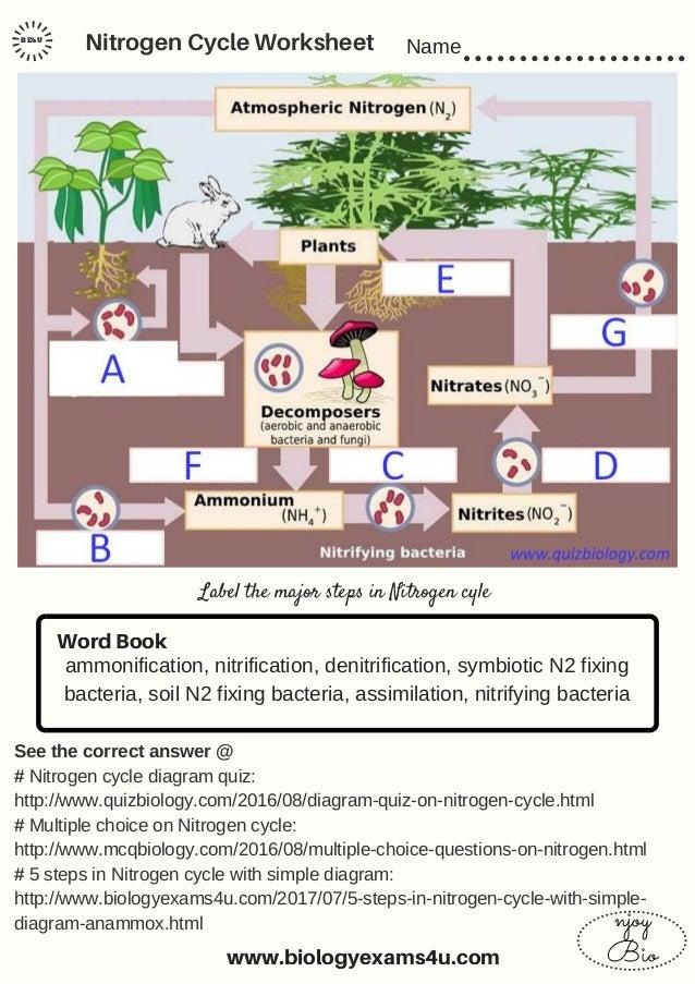 worksheet. Carbon Cycle Diagram Worksheet. Grass Fedjp Worksheet ...