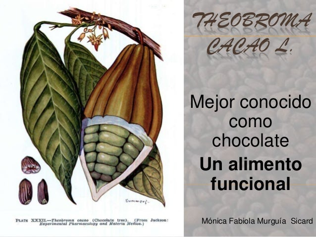 THEOBROMA CACAO L.Mejor conocido    como  chocolate Un alimento  funcional Mónica Fabiola Murguía Sicard