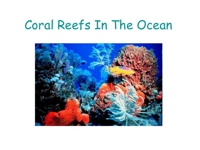 Coral Reefs In The Ocean