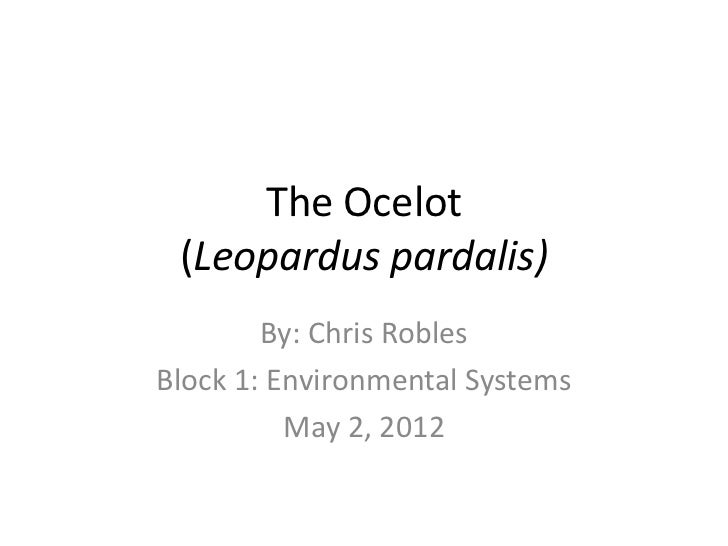 The Ocelot (Leopardus pardalis)        By: Chris RoblesBlock 1: Environmental Systems          May 2, 2012
