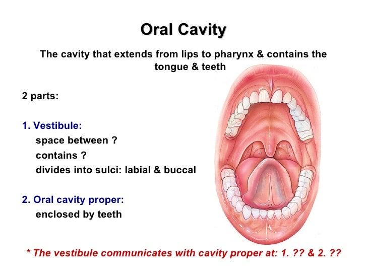 the oral cavity & salivary glands, Cephalic Vein