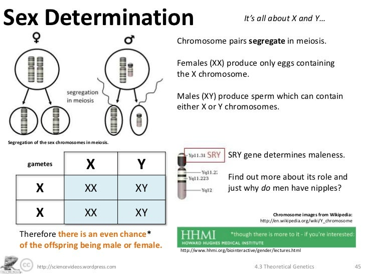 sex chromosomes and sex determination in man in Sacramento
