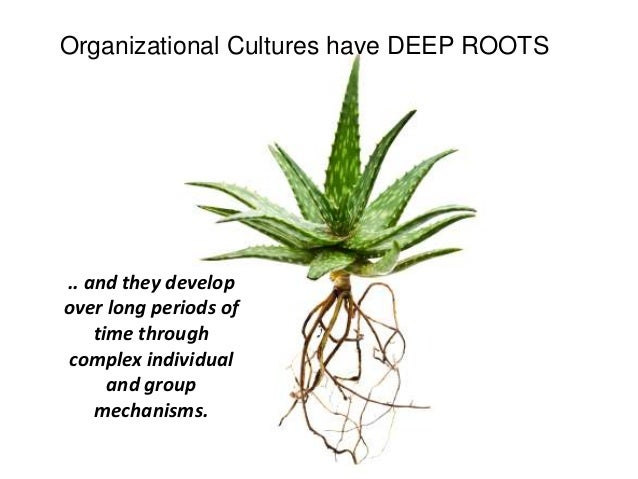 perspectives of organisational culture Chapter 2 organisational culture social scientists have explored the notion of organisational culture as a perspective in organisational theory over the past decades.
