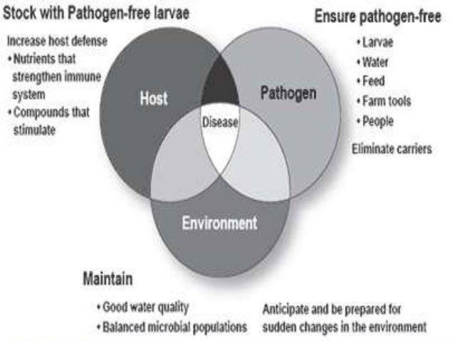 multicausation disease model Theories of disease causation..ppt
