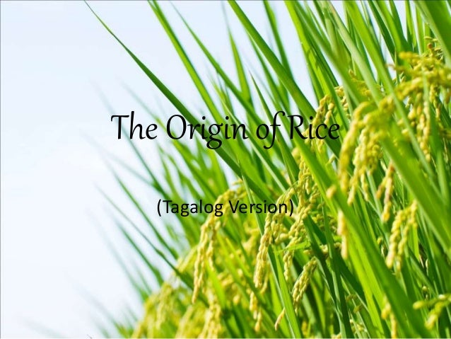 The Origin of Rice (Tagalog Version)