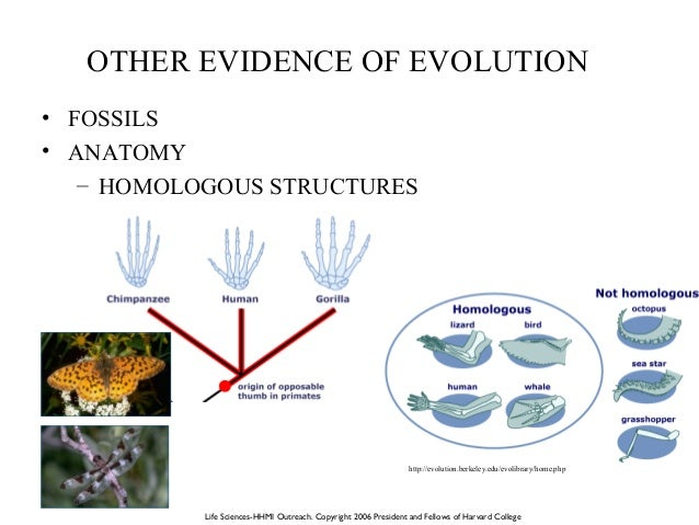 Theory of evolution beth mick lesson plan 12 other evidence of evolution publicscrutiny Gallery