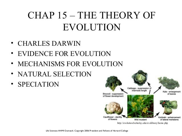 evidence for evolution includes Evidence for evolution: important modern-day examples of evolution include the emergence of drug multiple types of evidence support the theory of evolution.