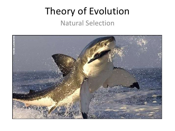 Theory of Evolution   Natural Selection