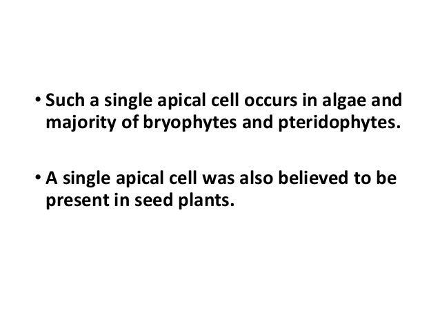 Theory of shoot apical meristem