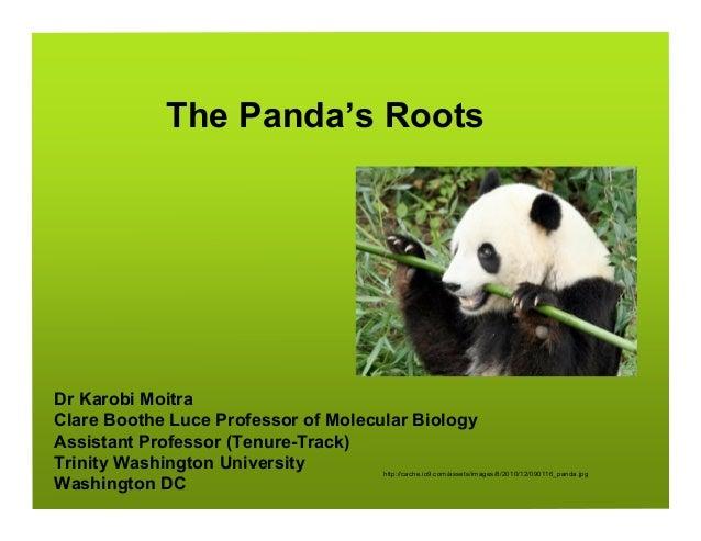 The Panda's RootsDr Karobi MoitraClare Boothe Luce Professor of Molecular BiologyAssistant Professor (Tenure-Track)Trinity...