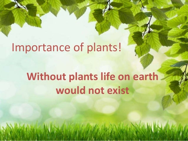 Importance of plants!