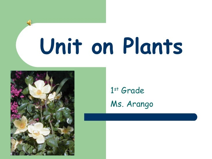 Unit on Plants 1 st  Grade  Ms. Arango