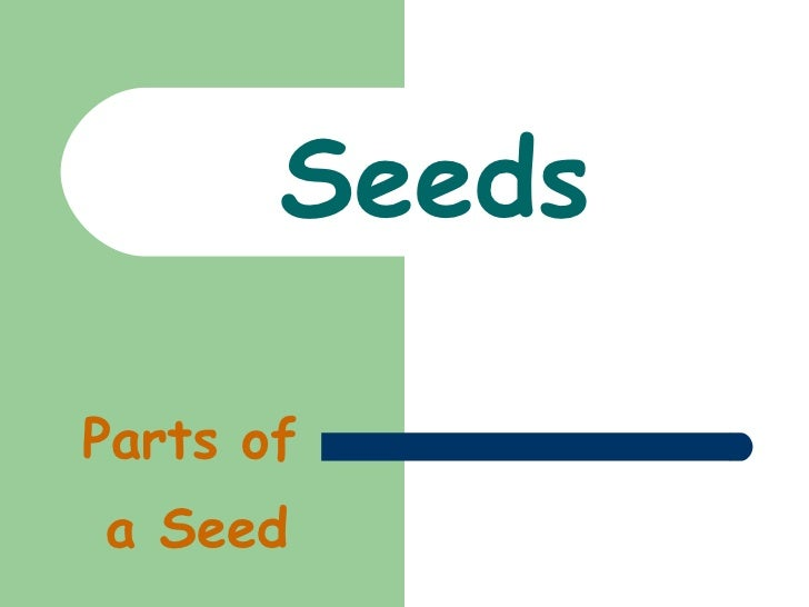 The parts of a seed
