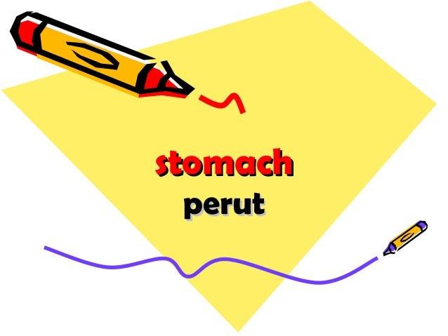 stomachstomach perutperut