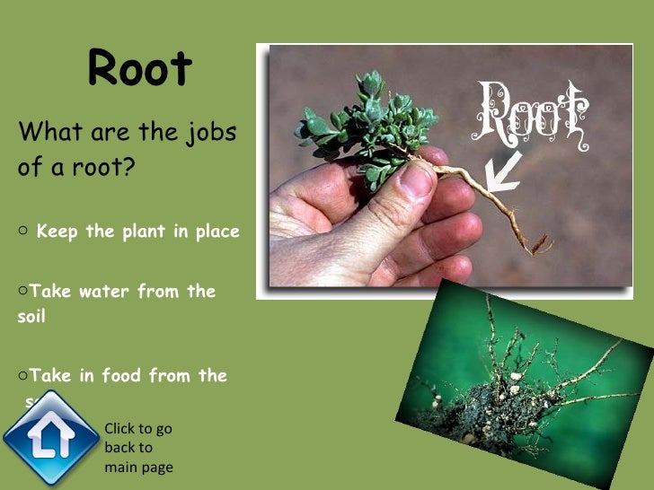 The Parts Of Plants Slide 3