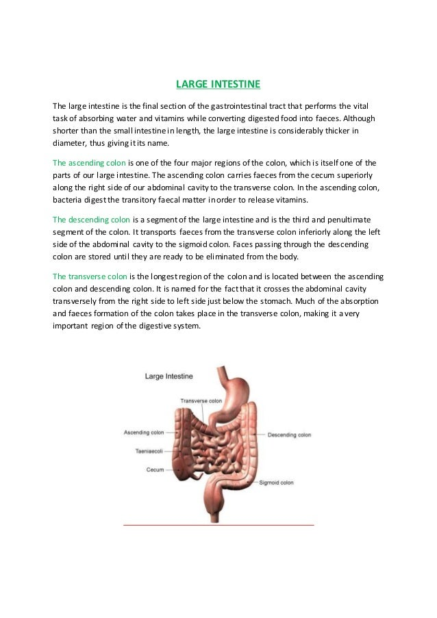 Parts Of The Digestive System