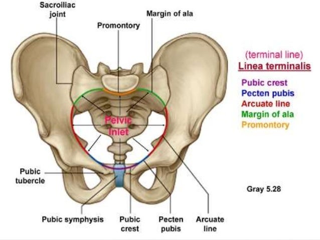 The Passage – Maternal Pelvis