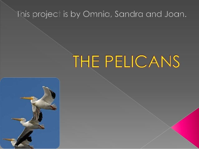 The pelicans are birds.  They are carnivores.  They are white and black.  They aren't friendly. 