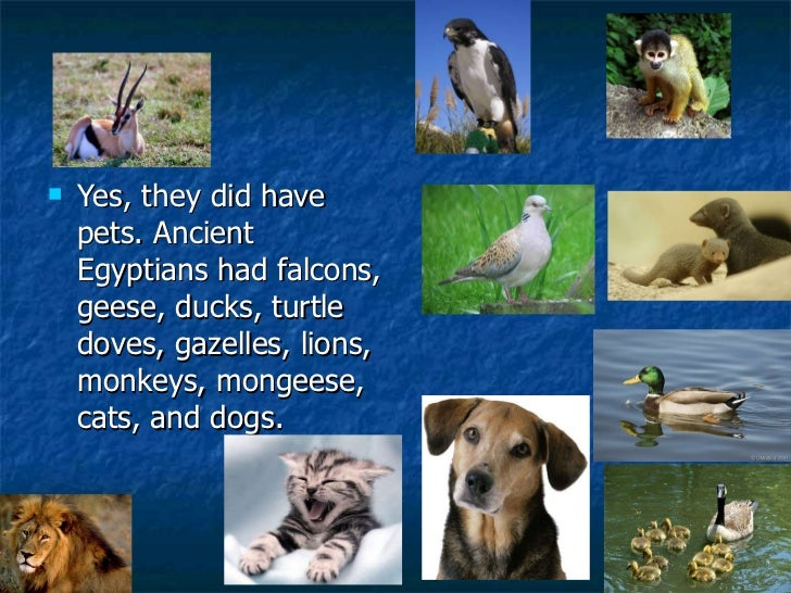 Monkeys Have Dogs As Pets