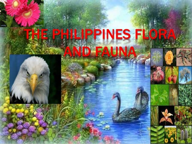 importance of flora and fauna
