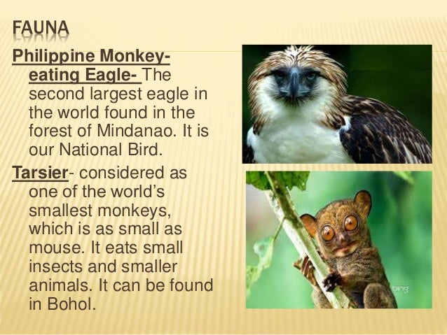 flora and fauna in the philippines Like the everglades in florida and the bonneville salt flats of utah, the tropical rain forest of the philippines is like no other place on earth while deforestation.