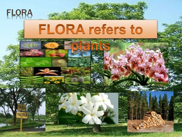 PHILIPPINE FLORA AND FAUNA EPUB