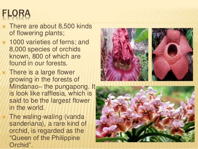 flora and fauna in the philippines The lichen flora of the philippines by herre, albert w and a great selection of similar used, new and collectible books available now at abebookscom.