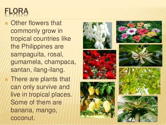 The Philippine Flora And Fauna