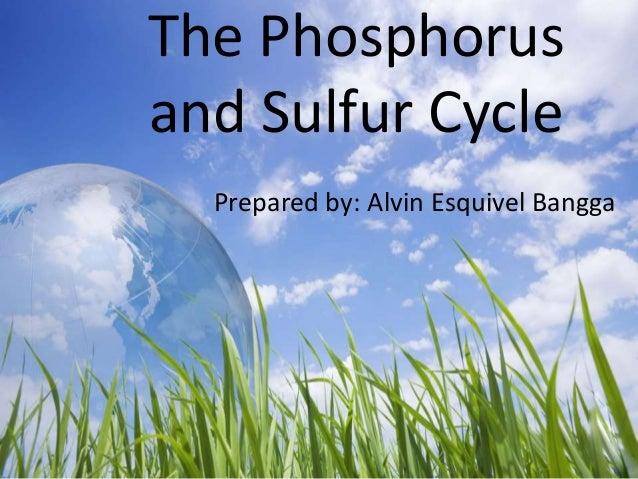 The Phosphorus and Sulfur Cycle Prepared by: Alvin Esquivel Bangga