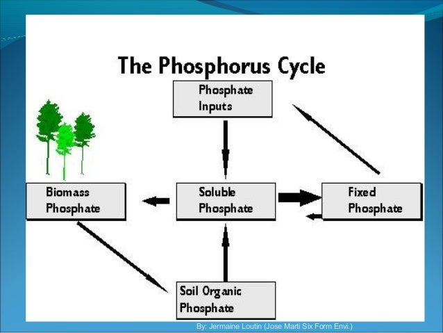 the phosphorous cycle Phosphorus (p) is another one of the essential elements that cycle through the ecosystem it is an element that is found in the ground and then taken up by plants and animals it is an element that is found in the ground and then taken up by plants and animals.