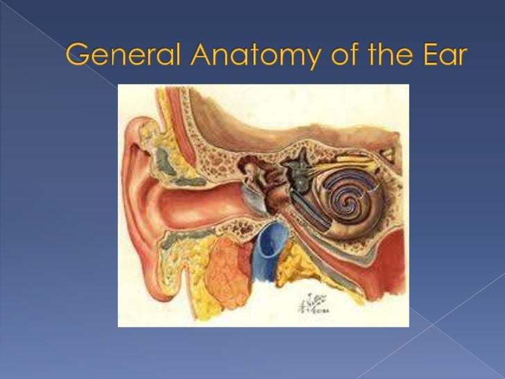 The physiology of the ear