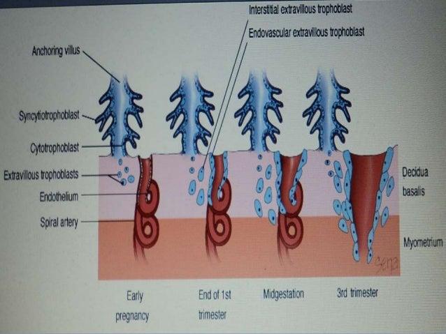 fetal membranes and placenta pdf