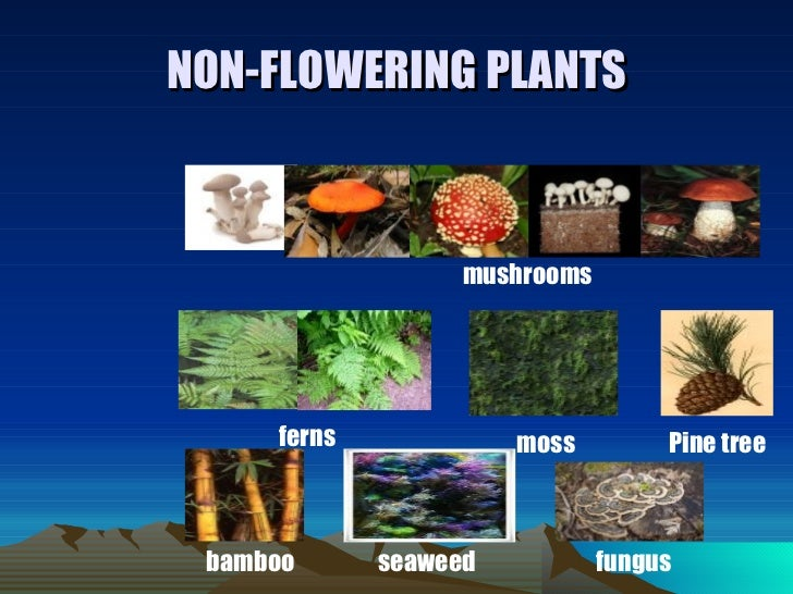 Non Flowering Plants Related Keywords Suggestions Non ... on large flowering houseplants, common flowering houseplants, easy houseplants, indoor houseplants, red flowering houseplants, white flowering houseplants, cactus houseplants, tropical houseplants, common potted houseplants, small flowering houseplants, purple flowering houseplants, blooming houseplants,